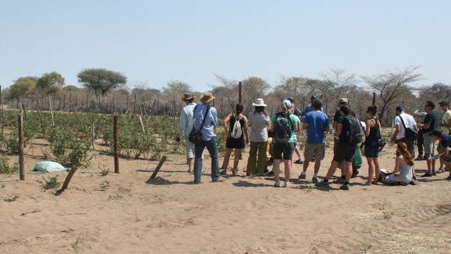 Landnutzungswandel in Subsahara-Afrika